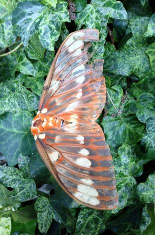 moth10